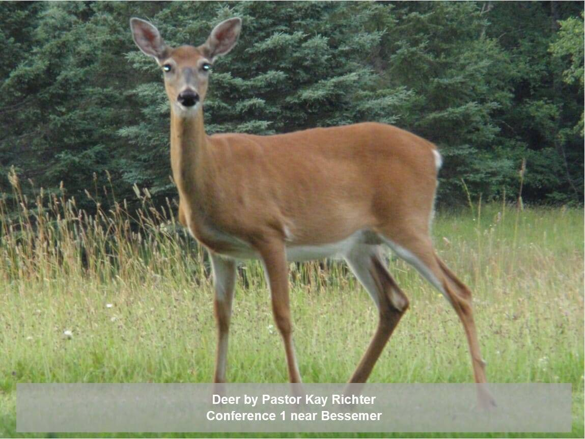 Deer by Kay Richter