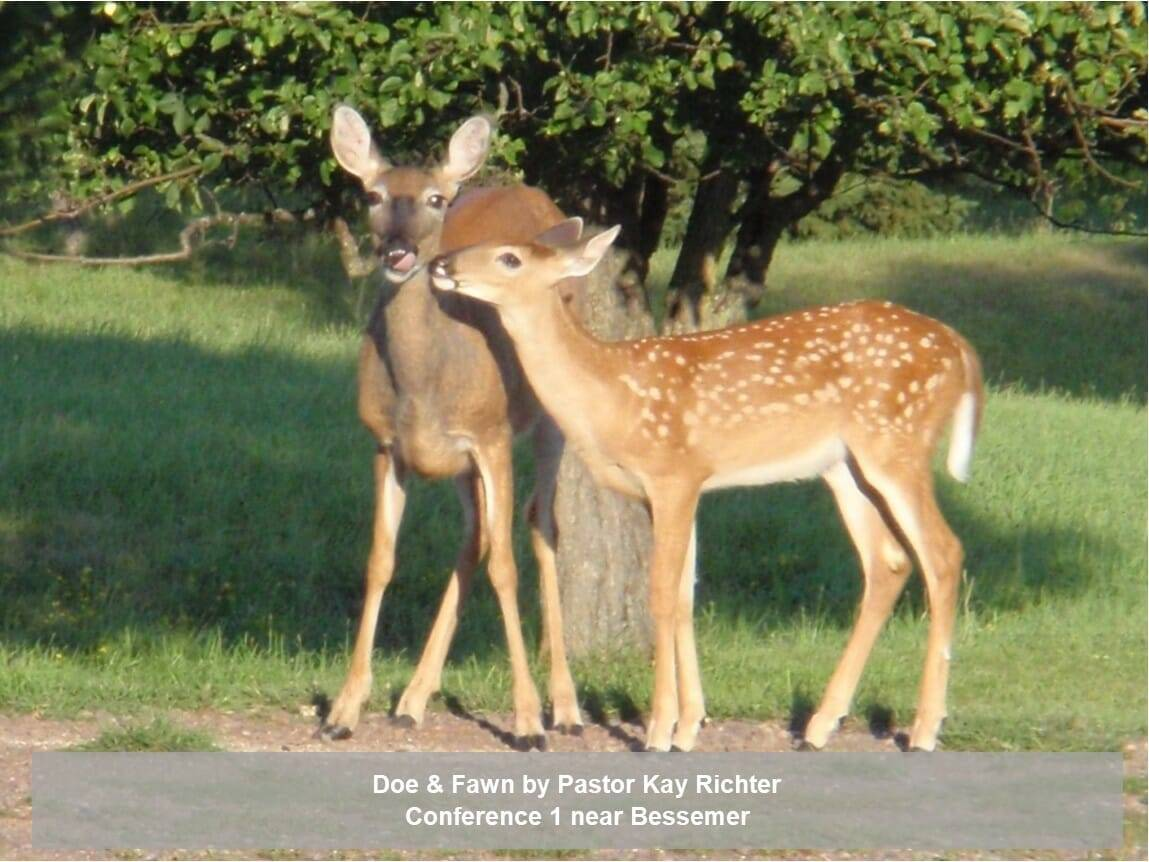 Doe and Fawn by Pastor Richter