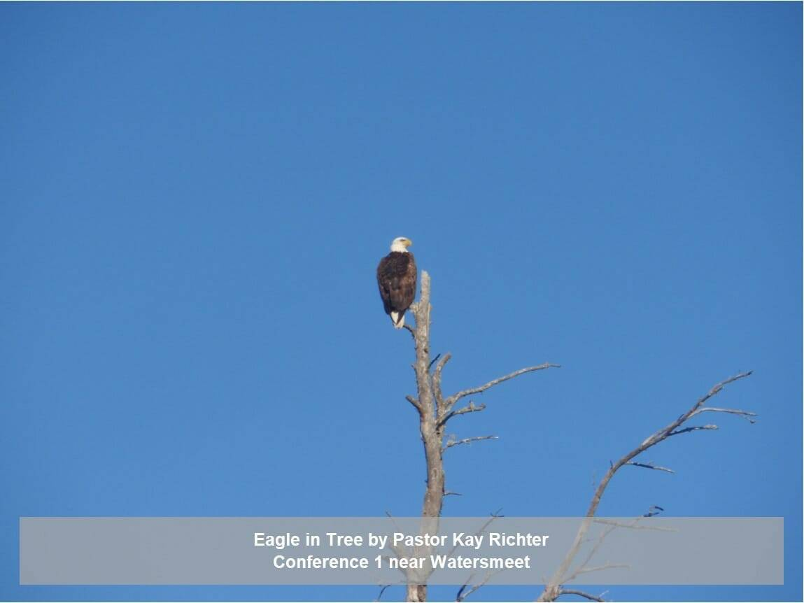 Eagle In Tree by Pastor Kay Richter